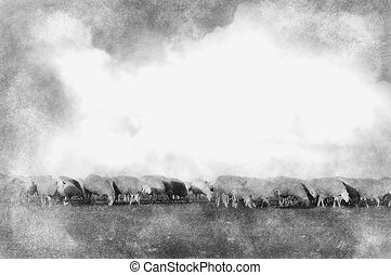Sheeps in a meadow hand drawing effect with pencils