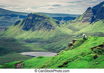 Sheeps in Quiraing in Isle of Skye, Scotland
