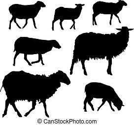 sheeps, komplet