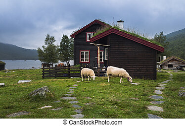 Sheeps near a norwegian house at the lake shore