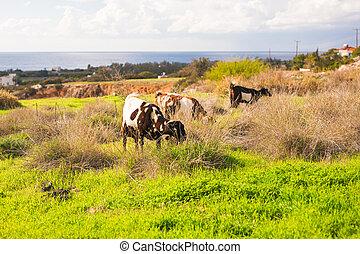 sheeps, pré vert, nature