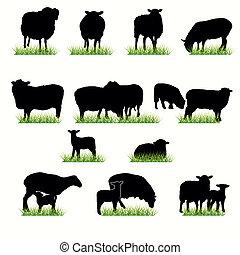 sheeps, set, silhouettes
