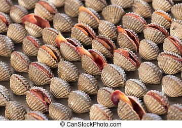 shell., almejas, mar