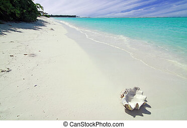 Shell and beach - Giant shell is lying on a tropical...
