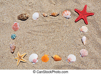 shell and starfish frame