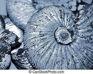shell background (fossilized ammonite)