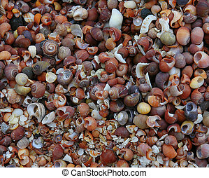 Shell Beach - A shell covered beach on the Isle of Muck in...