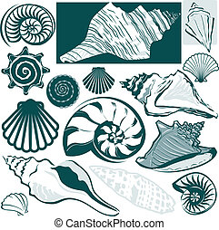 Clip art collection of various types of seashell