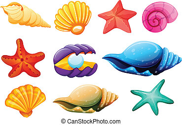 Shell collection - Illustration of a shell collection on a...