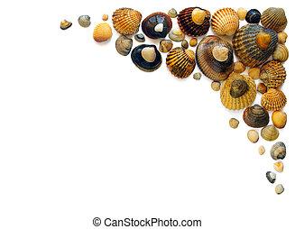 Shell Corner