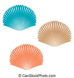 Shell - Set of different color sea shells