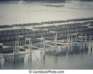 Shell farming - fisheries in sea