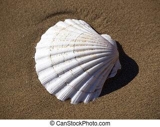 shell-fish