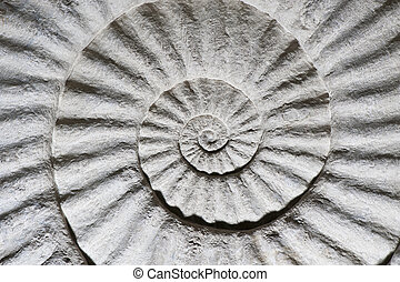 Shell fossil inside out