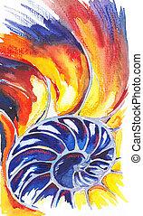 shell., nautile, dessin, aquarelles