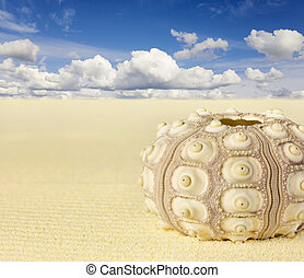 Shell of the sea urchin on beach
