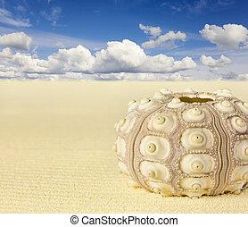 Shell of the sea urchin on beach