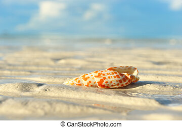 Shell on a beach at low tide
