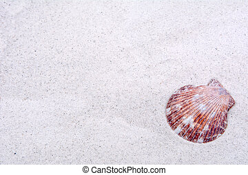Shell on a sand background