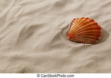 shell on a sandy beach - a shell is in the sand of a beach....