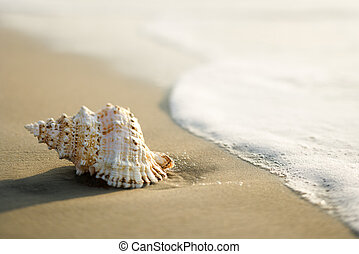 Shell on beach. - Conch shell on beach  with waves.