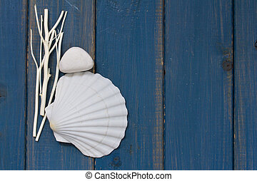 shell on blue wooden background