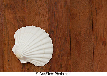 shell on brown wooden background