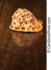 Shell on Old Wooden Table. Indoors