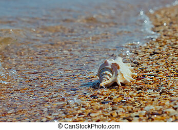 shell on pebbles in the wave