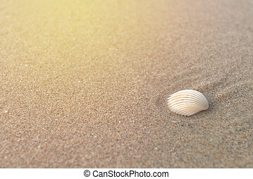Shell on sand at beach in the morning