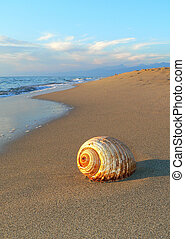 shell - a shell on the beach