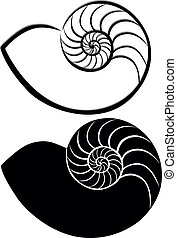 shell seashells