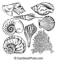 Shell set - Vintage hand drawn collection of various...
