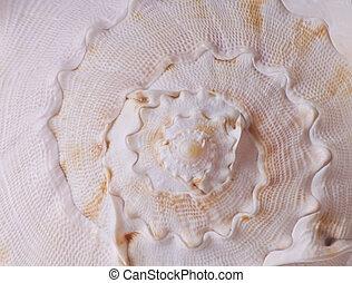 shell spiral background