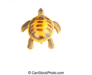 shell turtle on white background