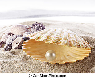 Shell with a pearl - An open sea shell with a pearl inside....