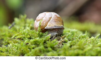 Shelled snail and ant - Snail over green lichens and moss...