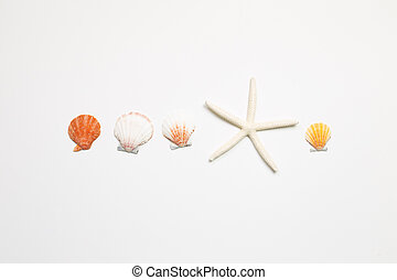 Shellfish and starfish on white background. summer marine decoration. flat lay, top view, copy space