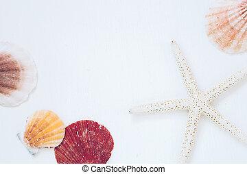 Shellfish and starfish on white background, summer marine decoration