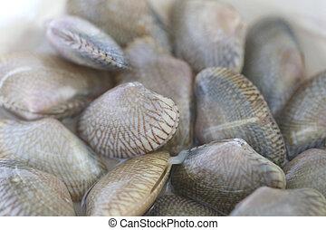 shellfish., frische