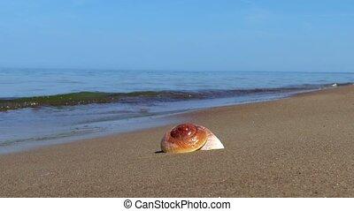 Shellfish on the seashore