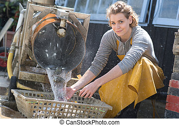 shellfish oysters cleaning processing weight quality classification