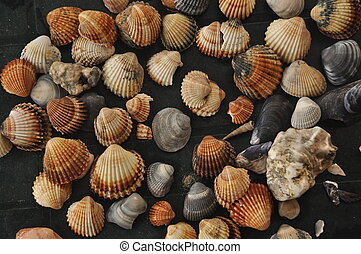 Shellfish, snails from the Mediterranean Sea on the beach in Italy.