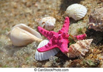 Shells and fishstar taken away ashore - Shells and starfish...