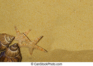 Shells and starfish on the beach: holiday concept 2