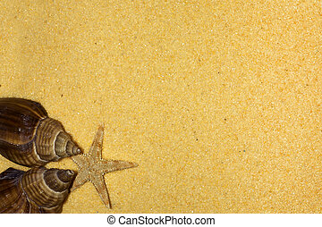 Shells and starfish on the beach: holiday concept