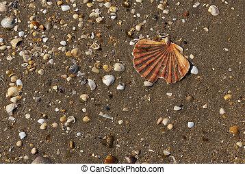 shells broken in the beach