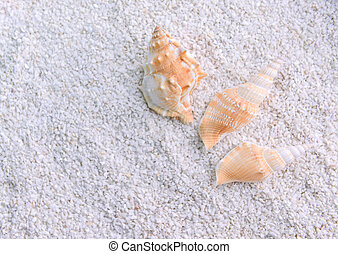 Shells in the beach sand