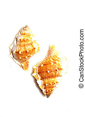 Shells isolated on white background