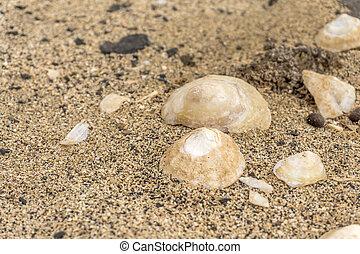 shells lying on the beach